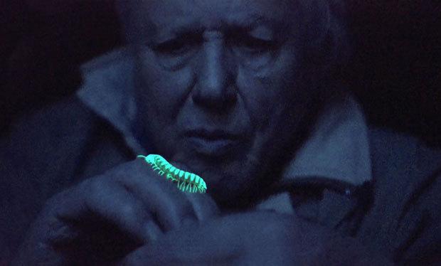 David Attenborough - Luz na Terra