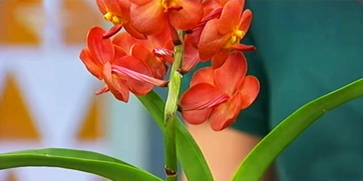 Gosta de Orquídeas? Saiba Como Tratá-las!