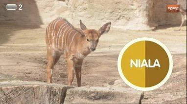 Animais: Niala